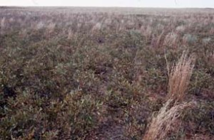 dead grass field